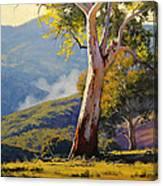 Turon Gum Tree Canvas Print