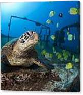 Turtle And Sealife Canvas Print