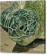 Turtle Beach Canvas Print