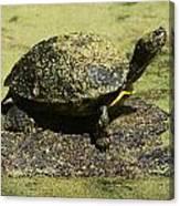 Turtle Camouflage Canvas Print