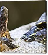 Turtle Conversation Canvas Print