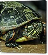 Turtle Neck Canvas Print