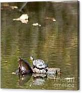 Turtle Print Canvas Print