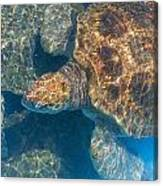 Turtle Underwater,high Angle View Canvas Print