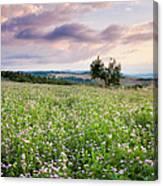 Tuscany Flowers Canvas Print