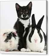 Tuxedo Kitten With Black Dutch Rabbit Canvas Print