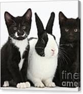Tuxedo Kittens With Dutch Rabbit Canvas Print