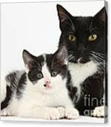Tuxedo Mother Cat And Kitten Canvas Print
