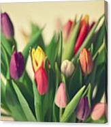 Twenty Colorful Tulips Canvas Print