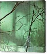 Twigs Shadows And An Empty Beer Jug Canvas Print