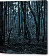 Twilight In The Smouldering Forest Canvas Print