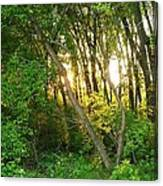 Twilight In The Woods Canvas Print