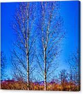 Twin Trees At South Platte Park Canvas Print
