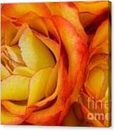 Twin Yellow Roses Canvas Print