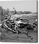 Twisted   Bw Canvas Print