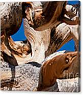 Twisted Bristlecone Pine Canvas Print