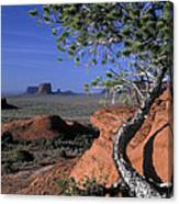 Twisted Tree Monument Valley Canvas Print