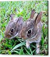 Two Baby Bunnies Canvas Print