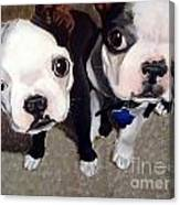 Two Bossies Canvas Print