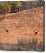 Two Bucks On The Run Canvas Print