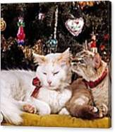 Two Cats At Christmas Canvas Print