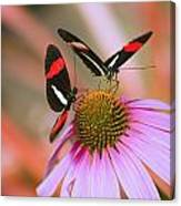 Two Colorful Butterflies On Cone Flower Canvas Print