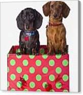 Two Dachshund Puppies Inside A Polka Canvas Print