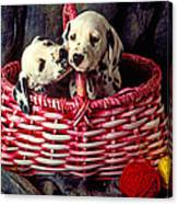 Two Dalmatian Puppies Canvas Print