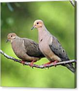 Two Doves Canvas Print