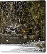 Two Ducks And A Tub Canvas Print