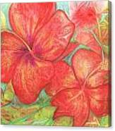 Two Hibiscus Blossoms Canvas Print