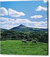 Two Horses Grazing In A Field Canvas Print