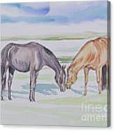 Two Mares Canvas Print