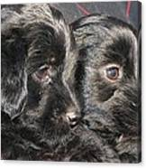 Two Matched Pups Canvas Print