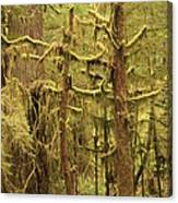 Waltzing In The Rainforest Canvas Print