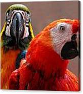 Two Parrots Closeup Canvas Print