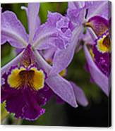 Two Pink Purple Orchids Canvas Print