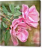 Two Pink Roses II Blank Greeting Card Canvas Print