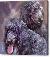 Two Poodles Canvas Print