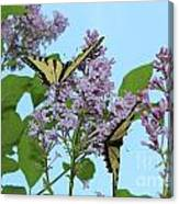 Two Swallowtails Canvas Print