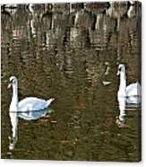 Two Swan Floating On A Pond  Canvas Print