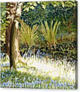 Sunlit Bluebells Llanina Ceredigion Canvas Print