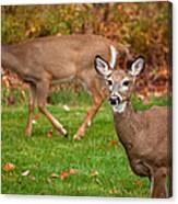 Two Visitors Canvas Print