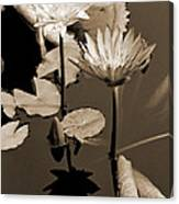 Two Waterlilies Sepia Canvas Print