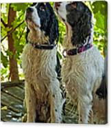 Two Wet Puppies Canvas Print