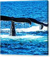 Two Whale Tails Canvas Print