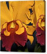 Two Yellow And Red Orchids Canvas Print