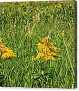 Two Yellow Wildflowers Canvas Print