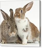 Two Young Rabbits Canvas Print