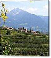 Tyrolean Alps And Vineyard Canvas Print